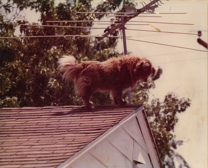 DOG ON THE ROOF GROUP MEETING OF ALCOHOLICS ANONYMOUS
